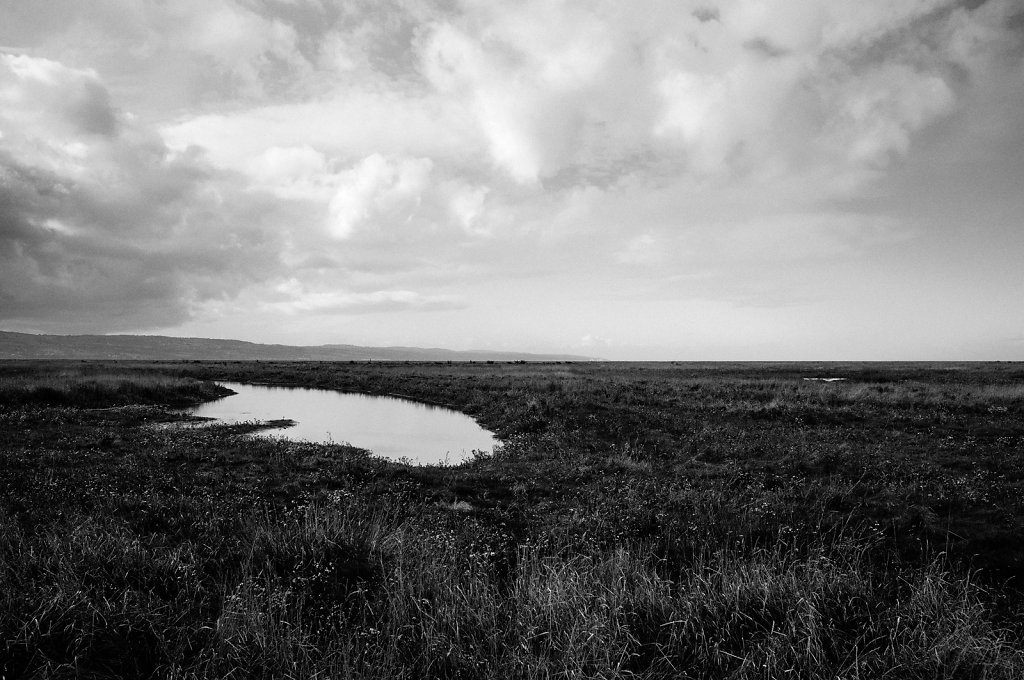 Dee Marshes, Wirral