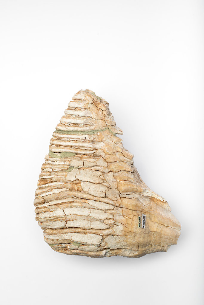 Complete Mammoth Molar photographed at The Dorking Museum